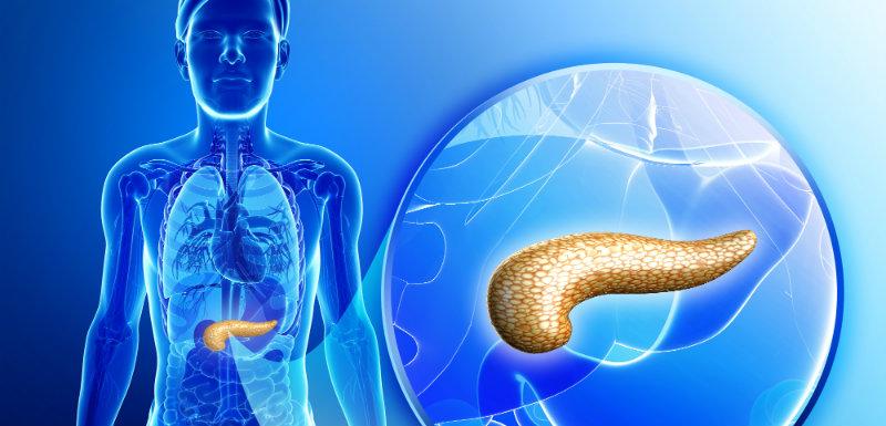 Diabète : un pancréas bio-artificiel prometteur