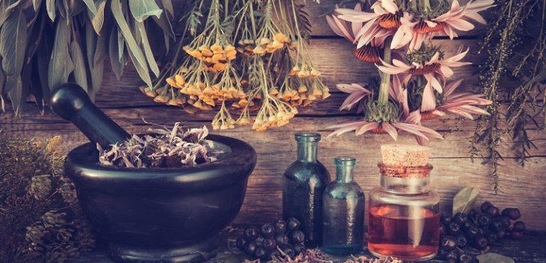 diabete herbes utiles