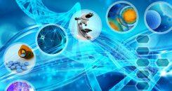 Diabète : des cellules souches aux cellules productrices d'insuline