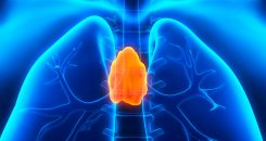 Diabète de type 1 : le rôle du thymus remis en cause