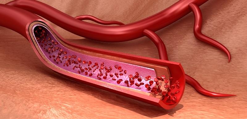 Vaisseaux sanguins macro tranchés avec des érythrocytes