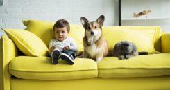 Des chiens formés pour détecter le diabète chez les enfants !