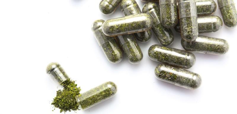 Diabète de type 1 : améliorer l'efficacité de la thérapie cellulaire grâce à une capsule à base d'algue brune
