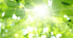 De la lumière pour soigner les plaies chroniques !